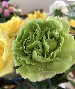 緑のカーネーションの花言葉