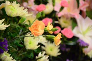 ピンクのカーネーションの花言葉